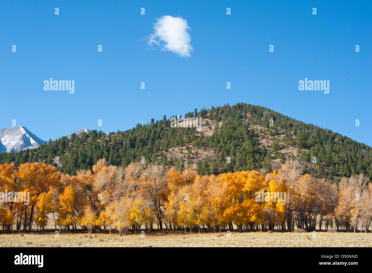A mountainside full of evergreens with a dusting of snow on the mountain in the background complete this autumn - Stock Image