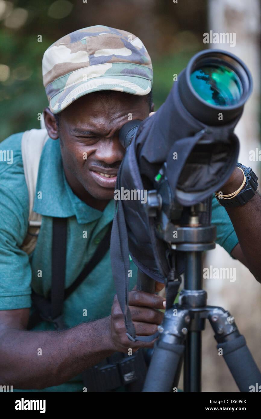 Bird Watcher, ECOTOURIST GUIDE, using telescope on a tripod. Guyana. - Stock Image