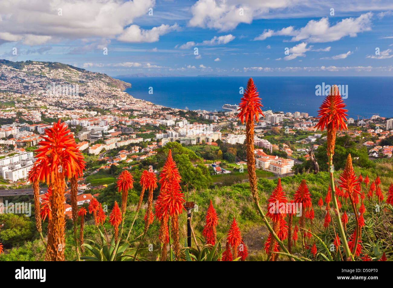 View over Funchal, capital city of Madeira, city and harbour with Aloe plants in foreground, Portugal, EU, Europe - Stock Image