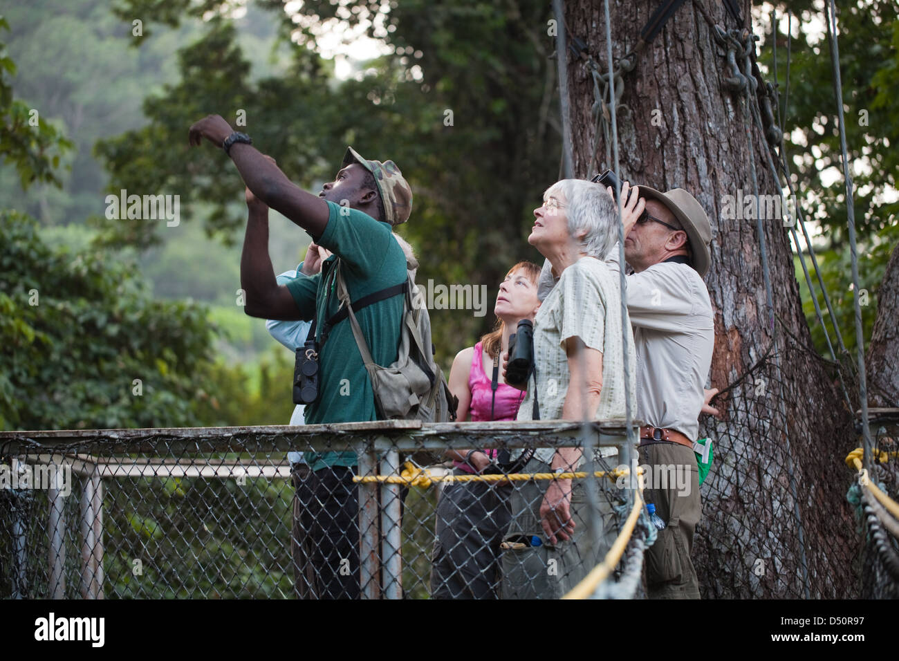 Iwokrama Canopy Walkway and ecotourists birdwatching with a local guide. Platform and connecting slung bridging. Guyana. & Iwokrama Canopy Walkway and ecotourists birdwatching with a local ...
