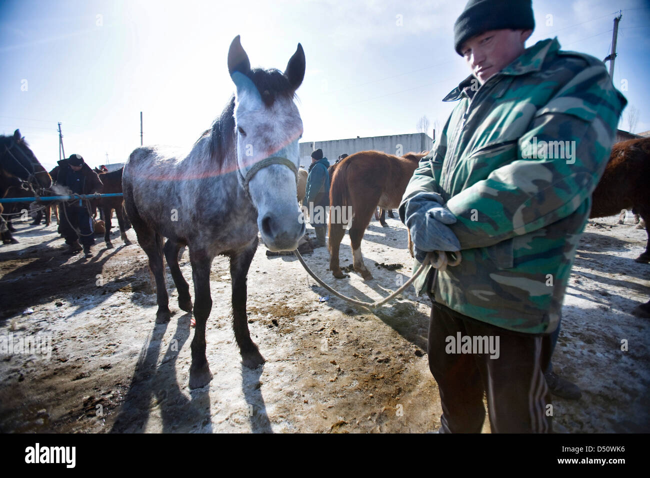 A Seller Poses With His White Horse On Sale Stock Photo Alamy
