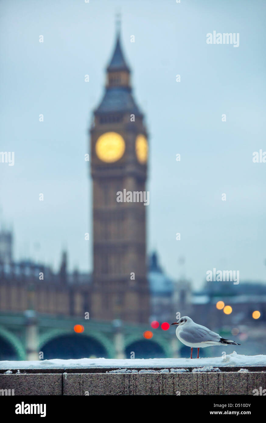 Common gull standing on snowy surface with the Big Ben Clock Tower on the background, London, England, UK - Stock Image