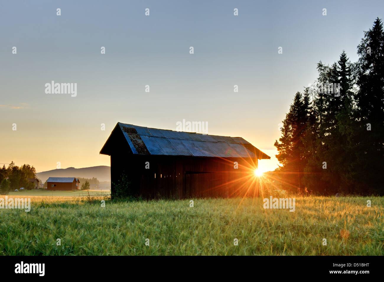 Sunset behind barn in field, Bollnäs, Hälsingland, Sweden, Europe - Stock Image