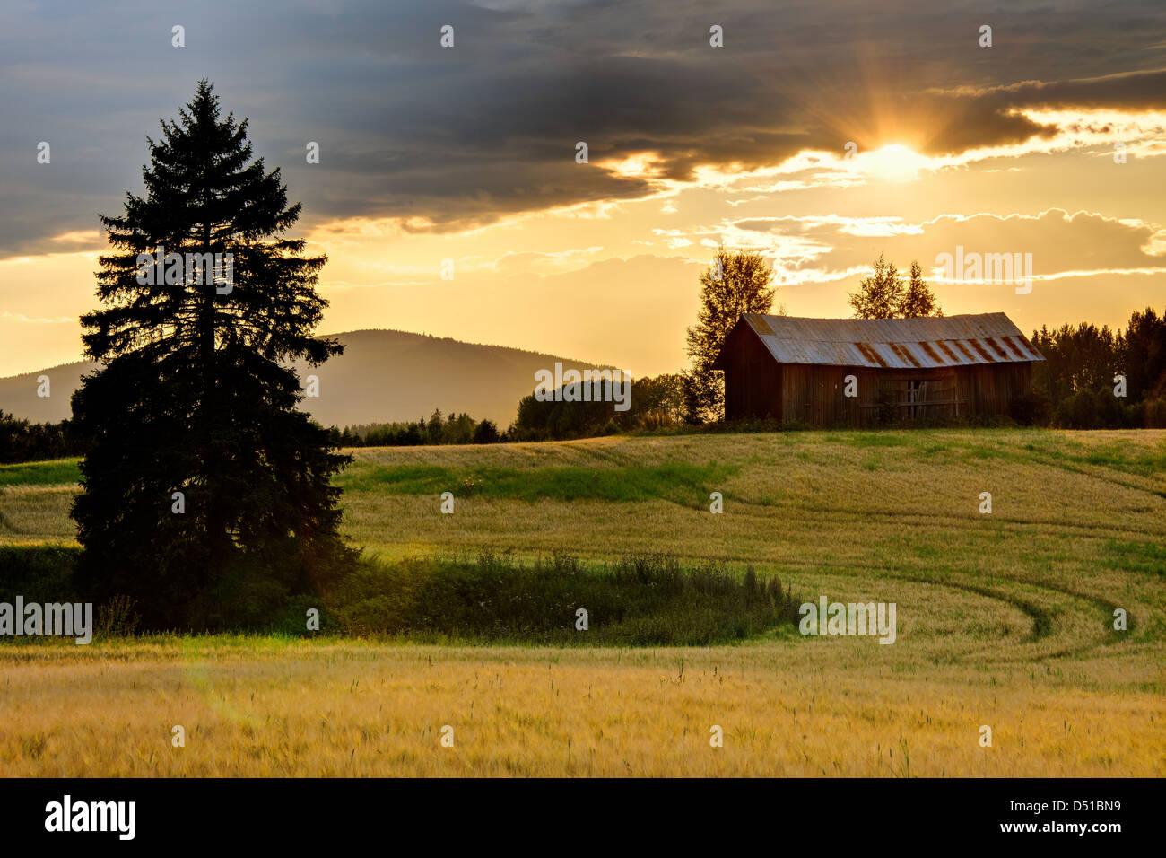 Sunset over farmland, Bollnäs, Hälsingland, Sweden, Europe - Stock Image