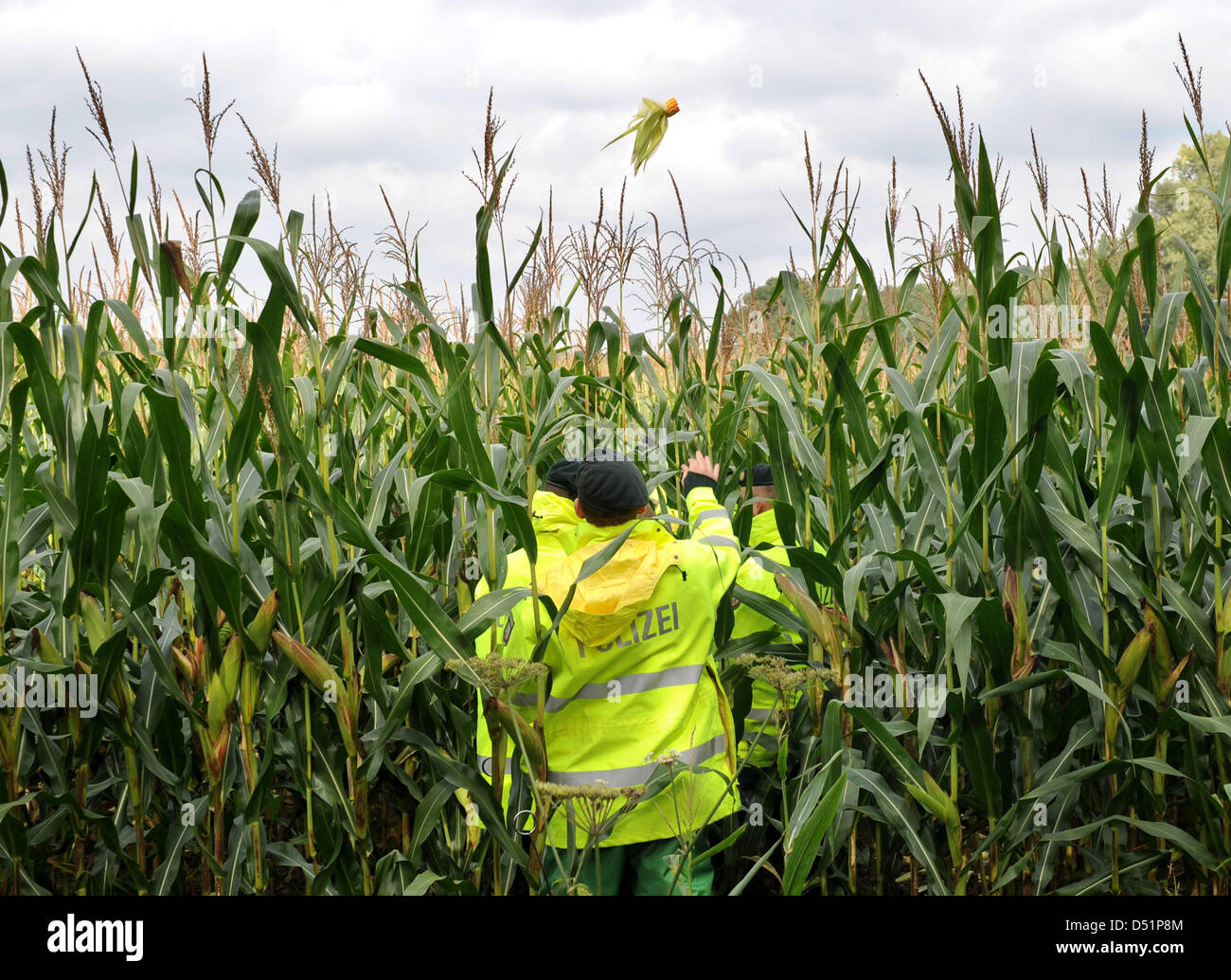 Police officers search a cornfield near Mariendonk Abby near the town of Grefrath, Germany, 26 September 2010. Police - Stock Image