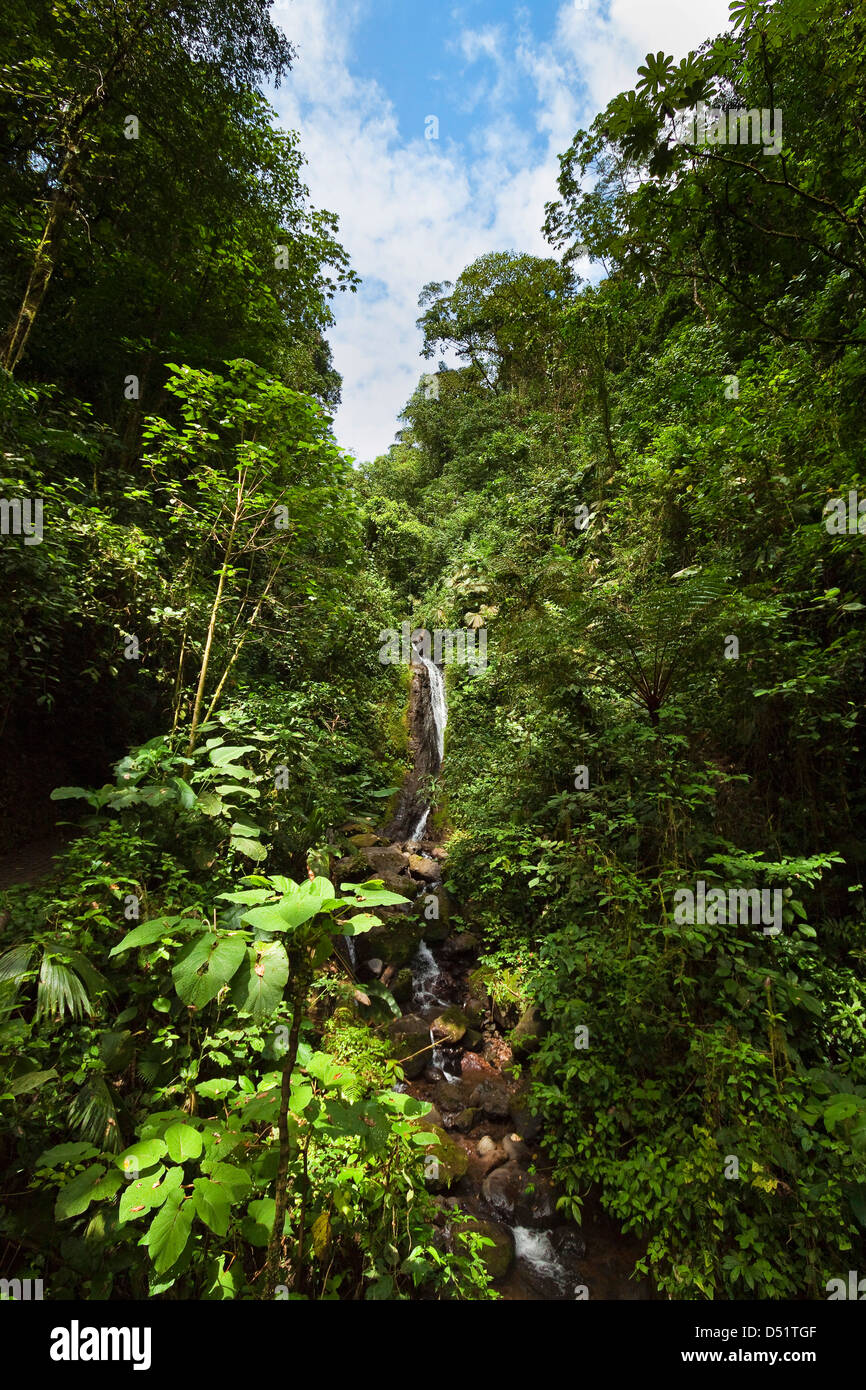 Waterfall at Arenal Hanging Bridges where the rainforest is accessible via walkways; La Fortuna, Alajuela Province, - Stock Image
