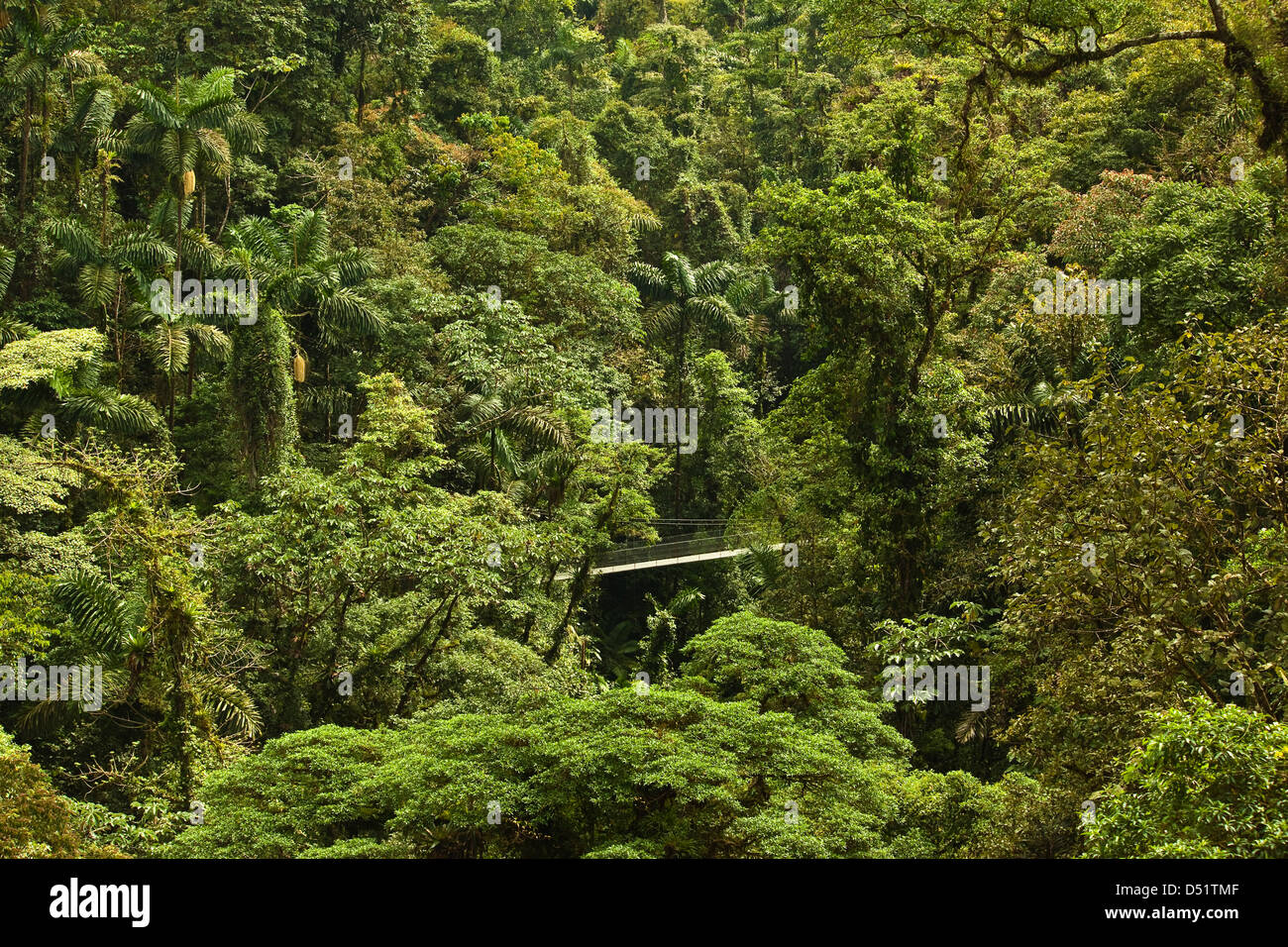 Jungle at Arenal Hanging Bridges where rainforest canopy is accessed via walkways; La Fortuna, Alajuela Province, - Stock Image