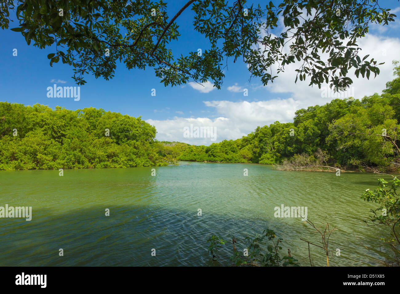 View across the Nosara River mouth towards the Biological Reserve; Nosara, Nicoya Peninsula, Guanacaste Province, Stock Photo