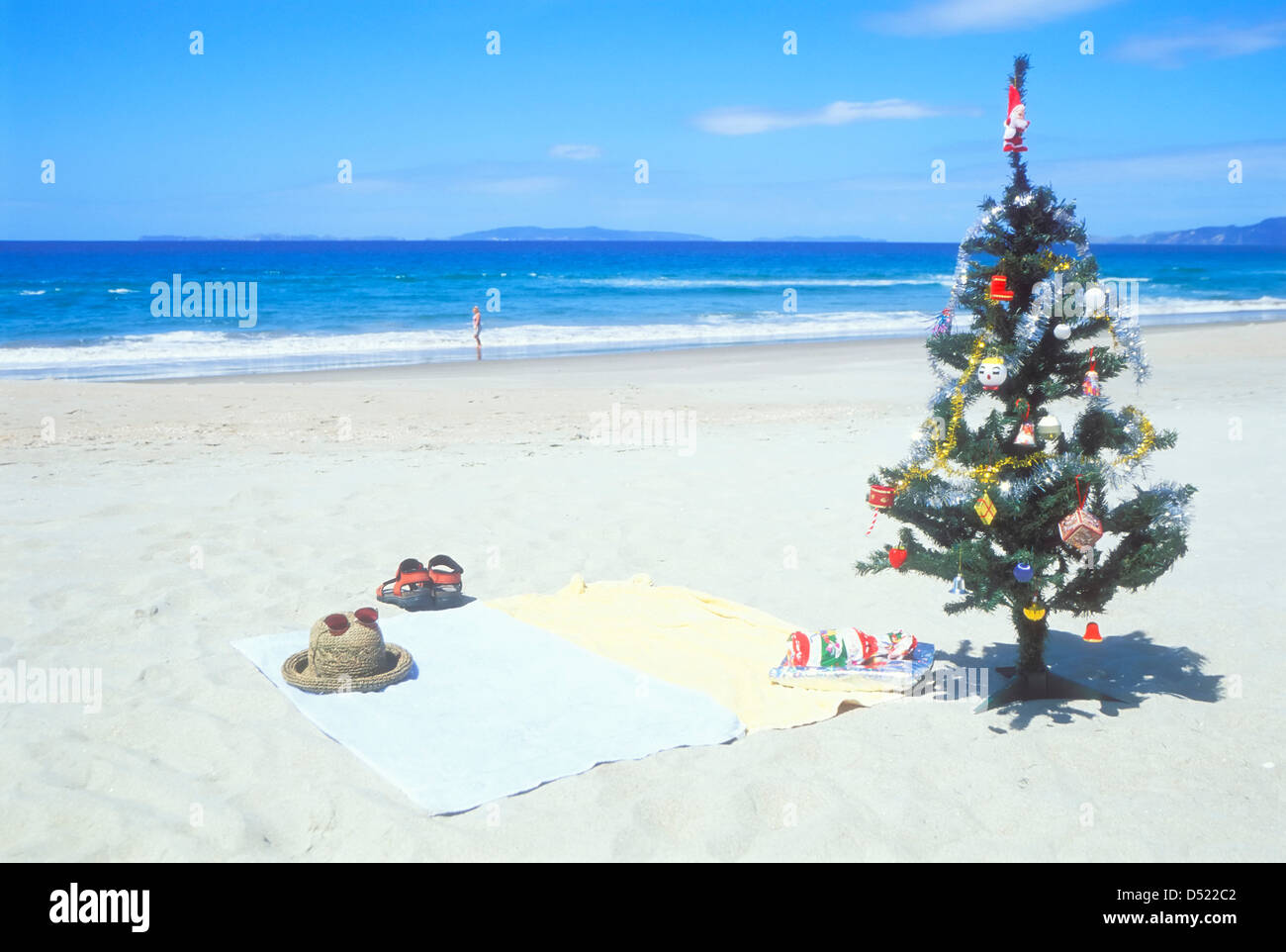 Christmas tree on the beach Coromandel peninsula North island New ...