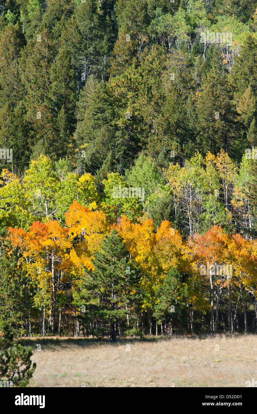 A mountainside full of evergreens and deciduous trees exhibits its ...