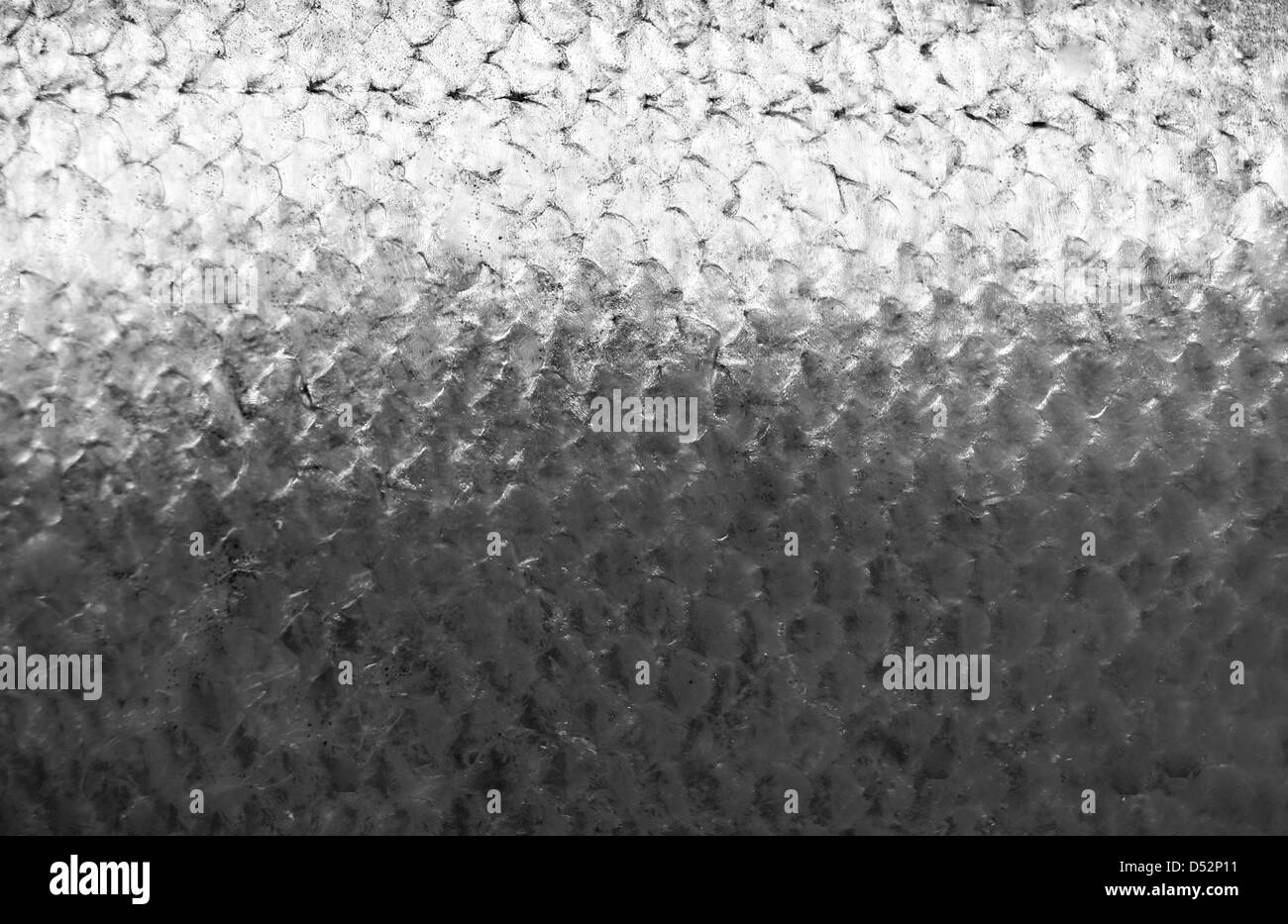 Salmon fish scales grunge texture back ground Stock Photo