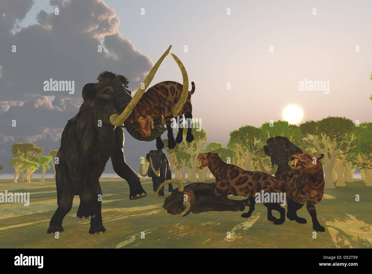 A pack of Saber Tooth Cats attack a small Woolly Mammoth while his herd comes to the rescue. - Stock Image