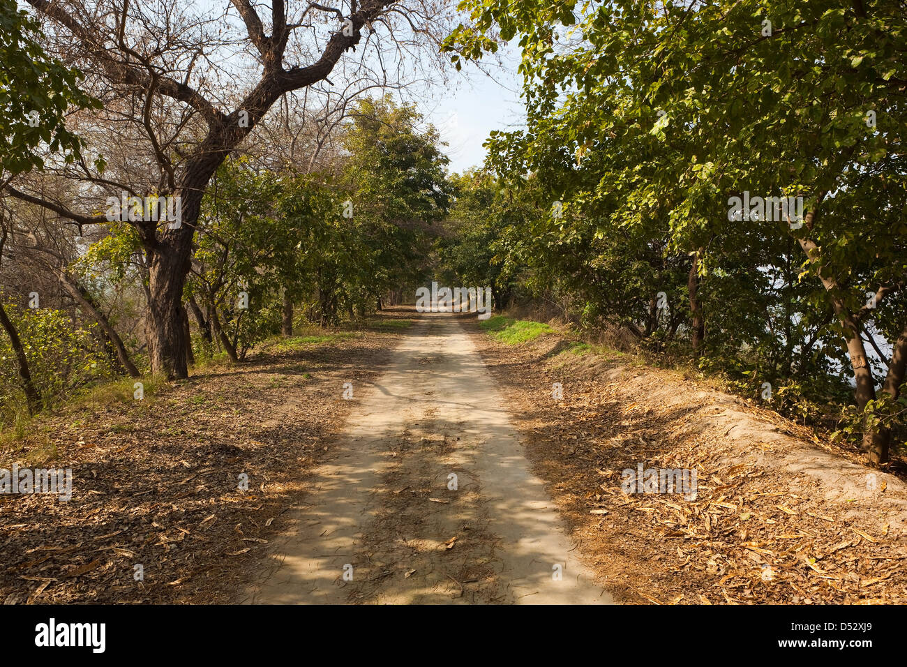 A tree lined dusty track in Harike wetlands and nature reserve in the Punjab India on a sunny day - Stock Image