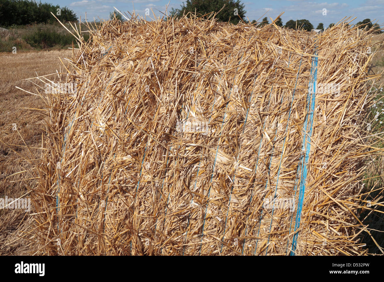 A roll of packed straw (hay bale) in a field in France. - Stock Image