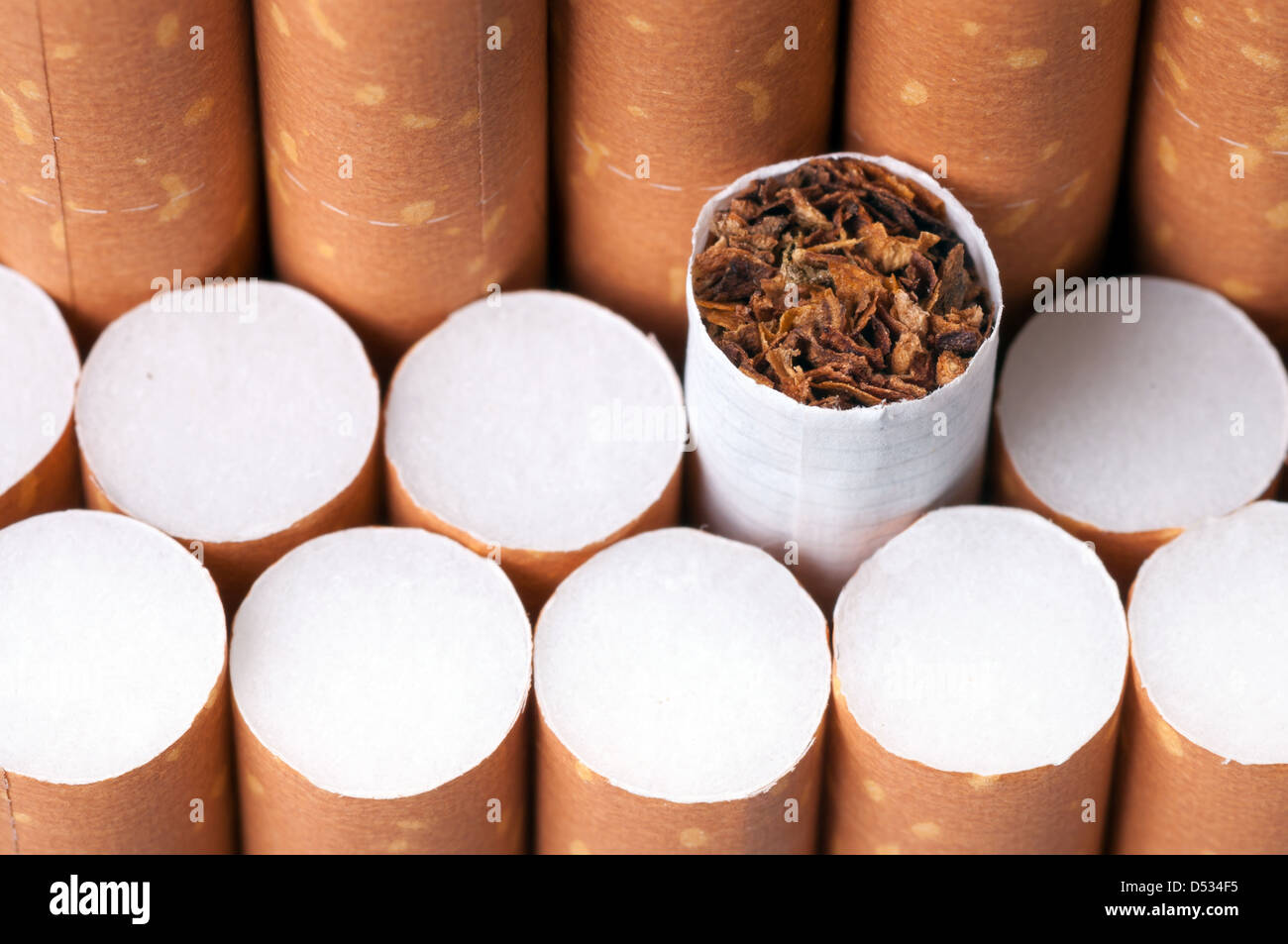 Tobacco in cigarettes with a brown filter close up - Stock Image