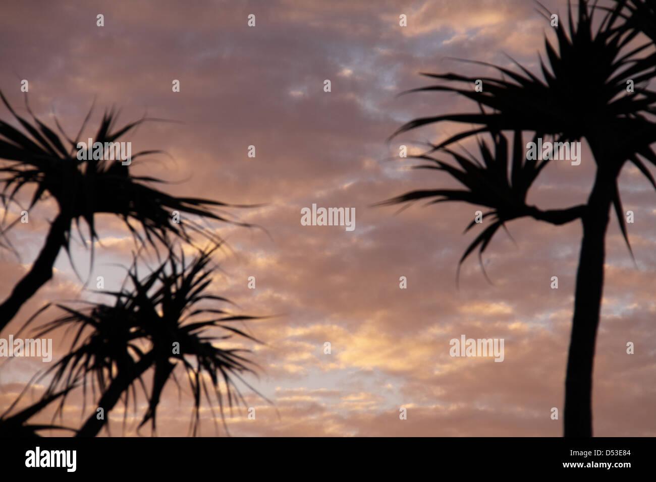 Pandanus Palm Trees (Pandanus Tectorius Australianus) - Stock Image