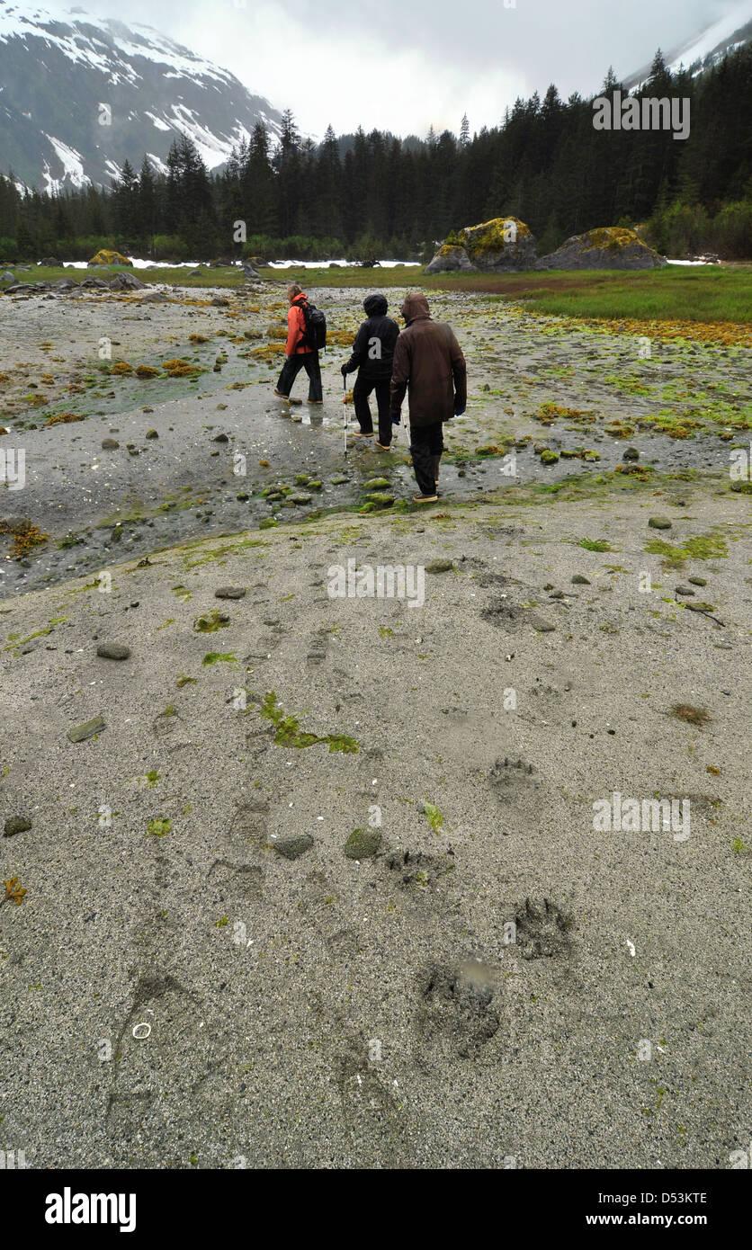Tracks of hikers and bears, Glacier Bay, Alaska. - Stock Image