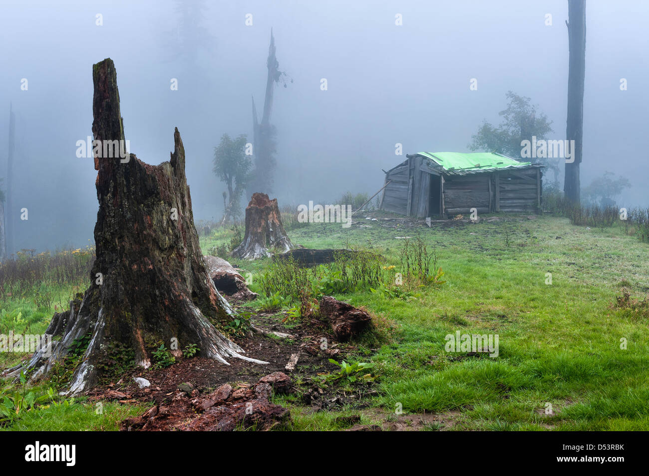 A Brokpa, nomadic people, wood cabin in the forests of western Arunachal Pradesh in Tawang district, India. - Stock Image
