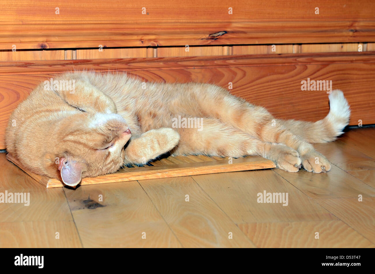 A beautiful orange tabby cat sleeping on a wooden heater vent. It's important for all colors to match when decorating - Stock Image