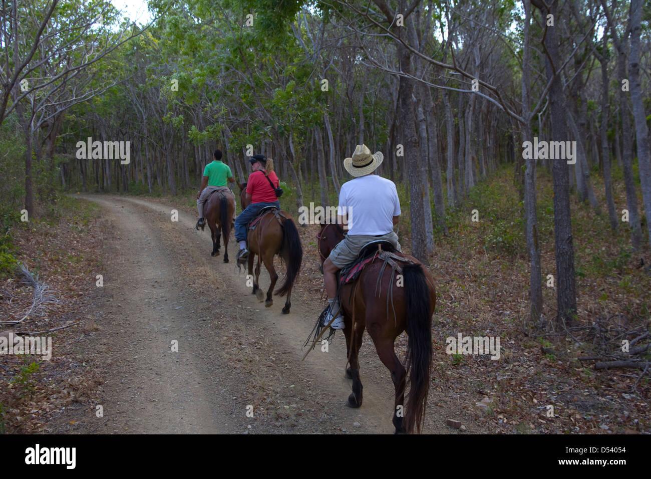 Trail riding through a hardwood forest at Morgan's Rock Hacienda & Ecolodge, Nicaragua - Stock Image