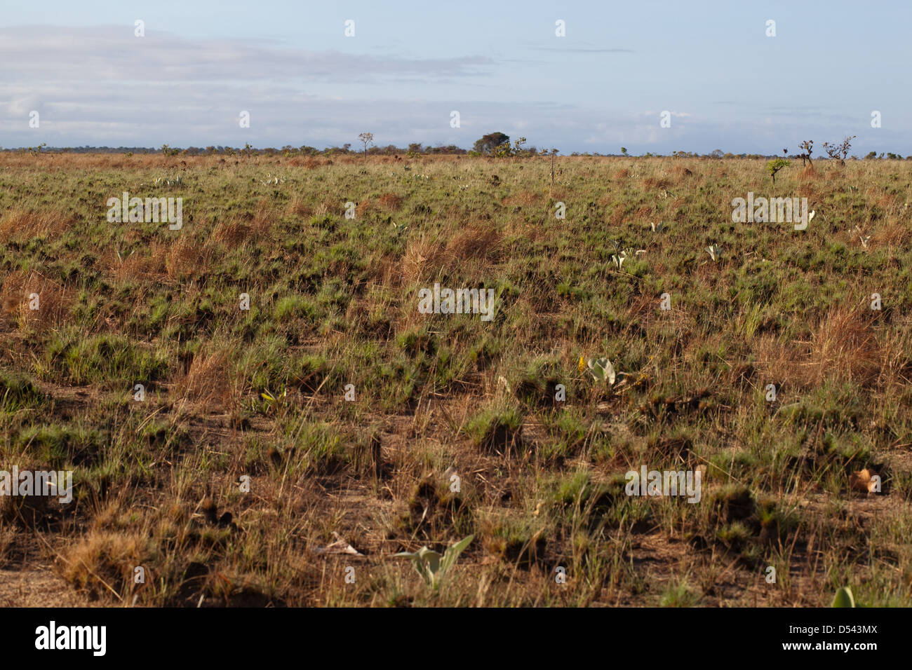 Ranching on savannah grassland. Formerly grazed areas are managed by fire to limit areas of scrub. Here grasses Stock Photo