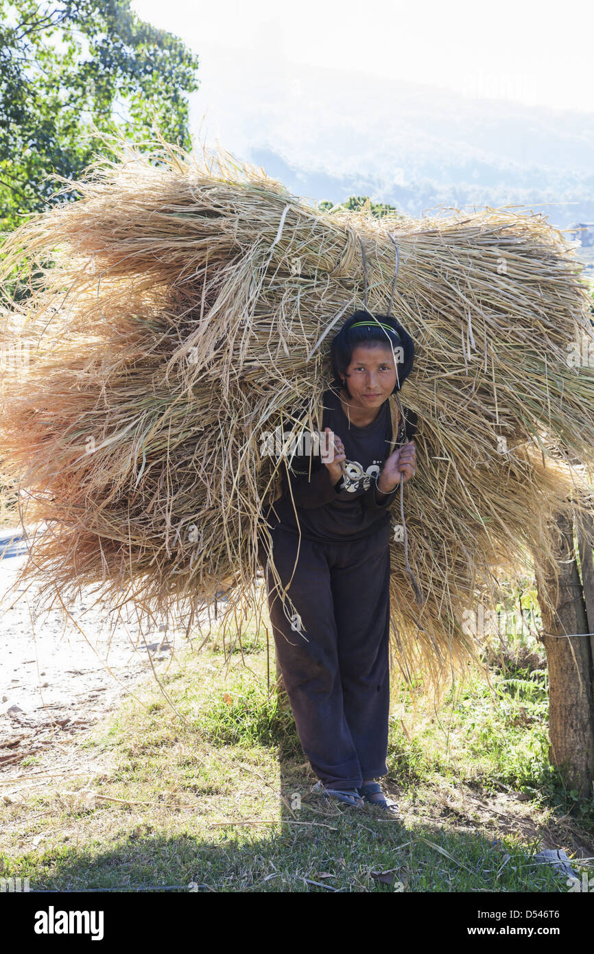 A woman carrying stalks from a rice field.  Central Bhutan. - Stock Image