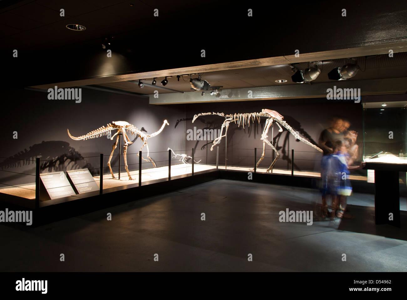 Exposition of Dinosaurs from Gobi desert in Mongolia. Cosmocaixa museum, Barcelona, Spain - Stock Image