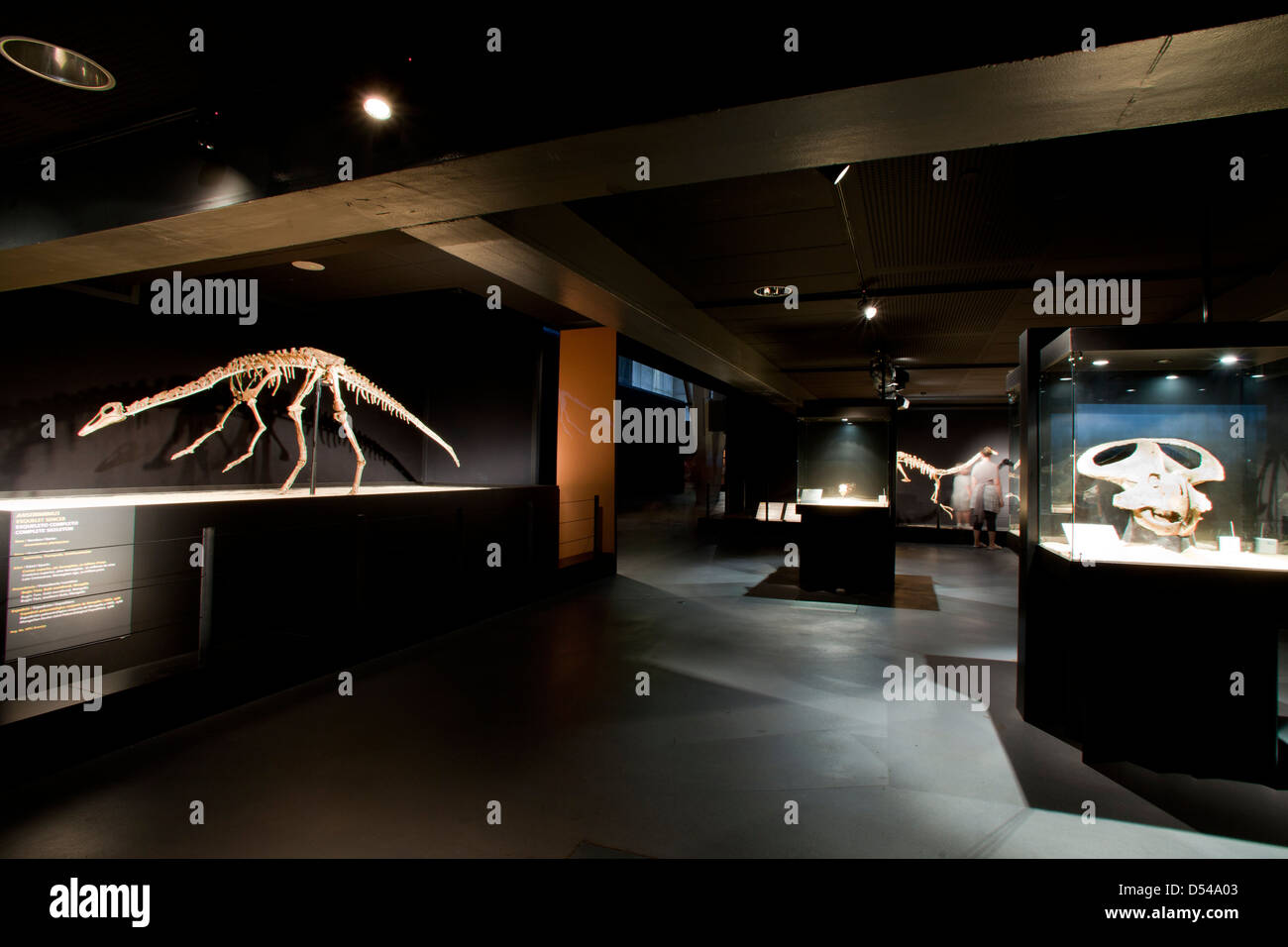 Exposition of Dinosaurs from Gobi desert in Mongolia. Cosmocaixa museum, Barcelona, Spain Stock Photo