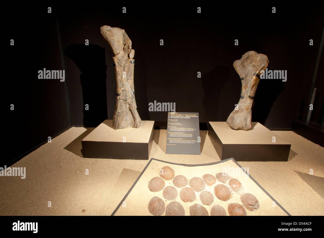 Extremities and eggs of Sauropodo, Exposition of Dinosaurs from Gobi desert in Mongolia. Cosmocaixa museum, Barcelona, - Stock Image