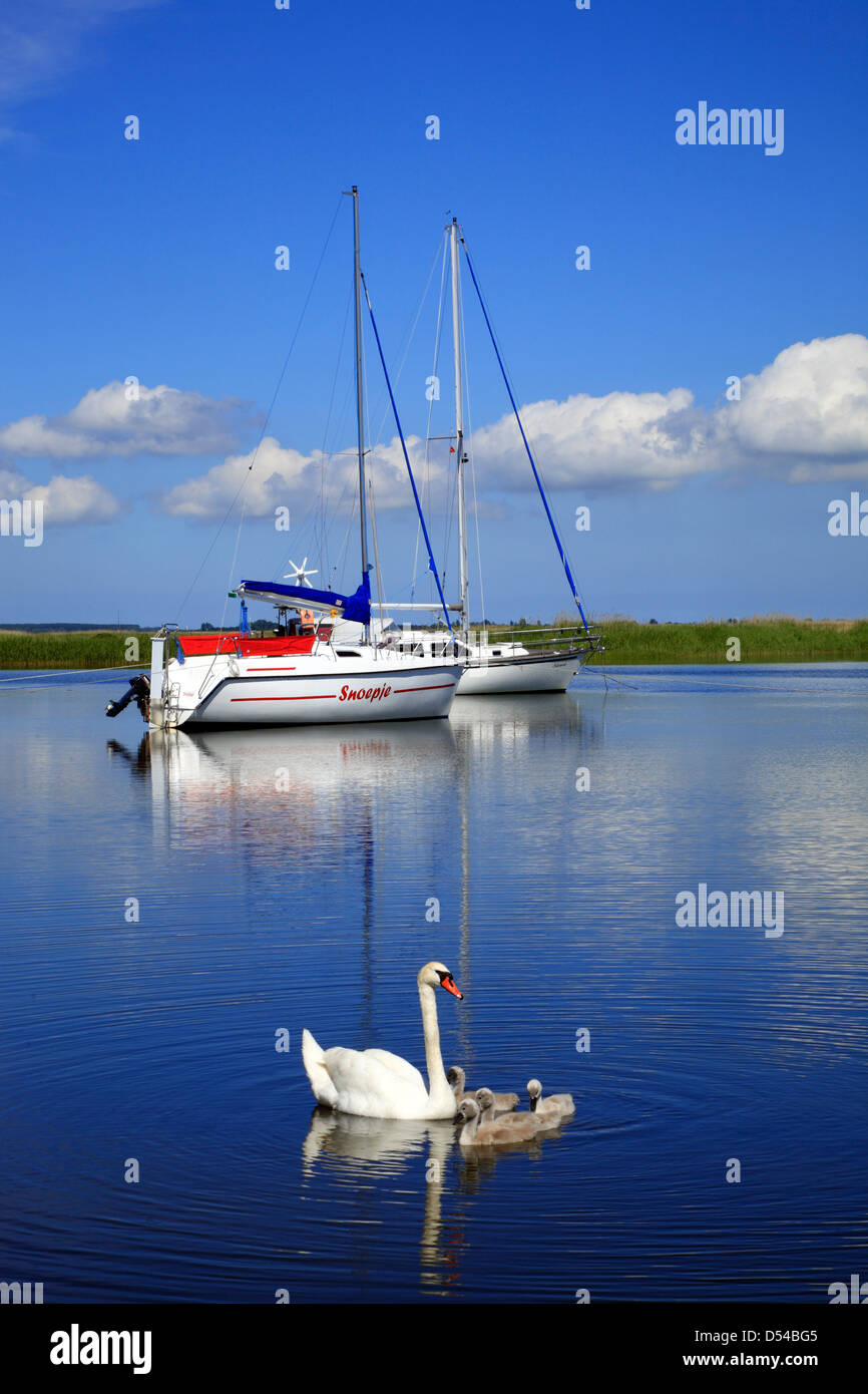 Swan family, Hiddensee Island, Baltic sea, Mecklenburg-Vorpommern, Western Pomerania, Germany, Europa - Stock Image