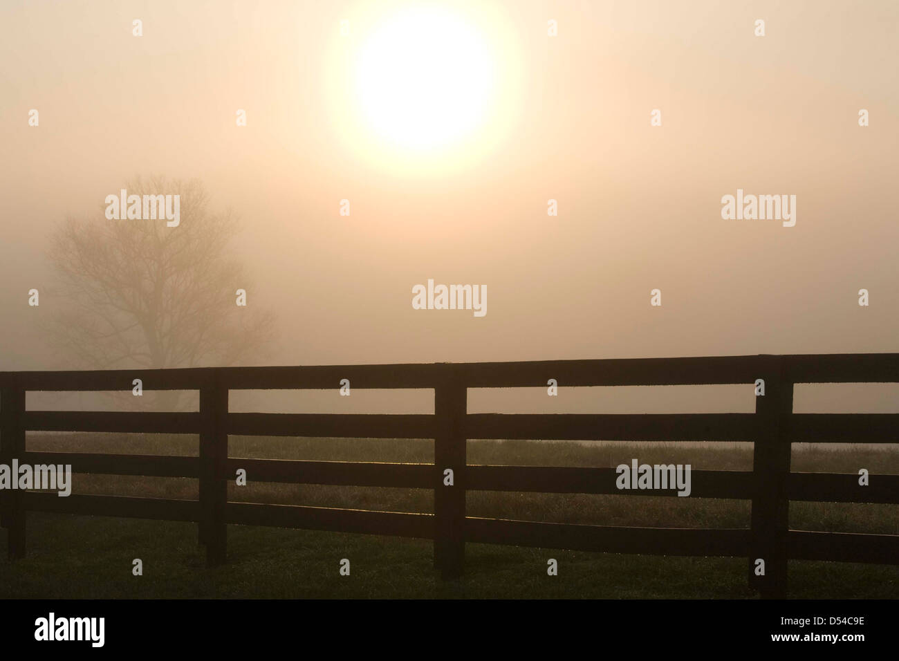 sun seen through morning fog and black plank fence - Stock Image