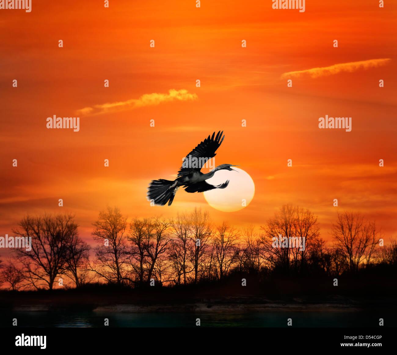 Flying Bird At Sunset - Stock Image