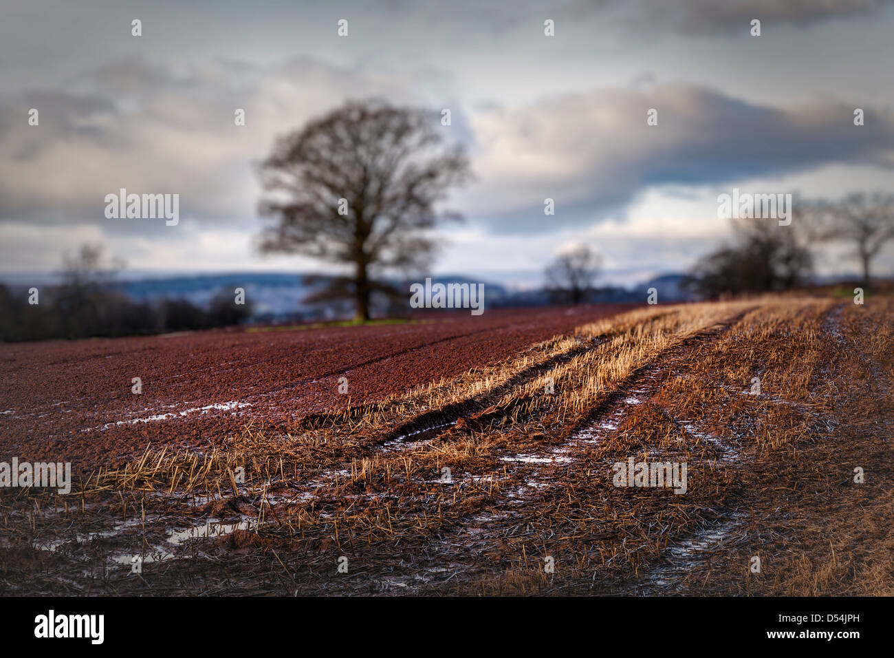 Corn stubble in waterlogged field, Herefordshire, England, UK Stock Photo