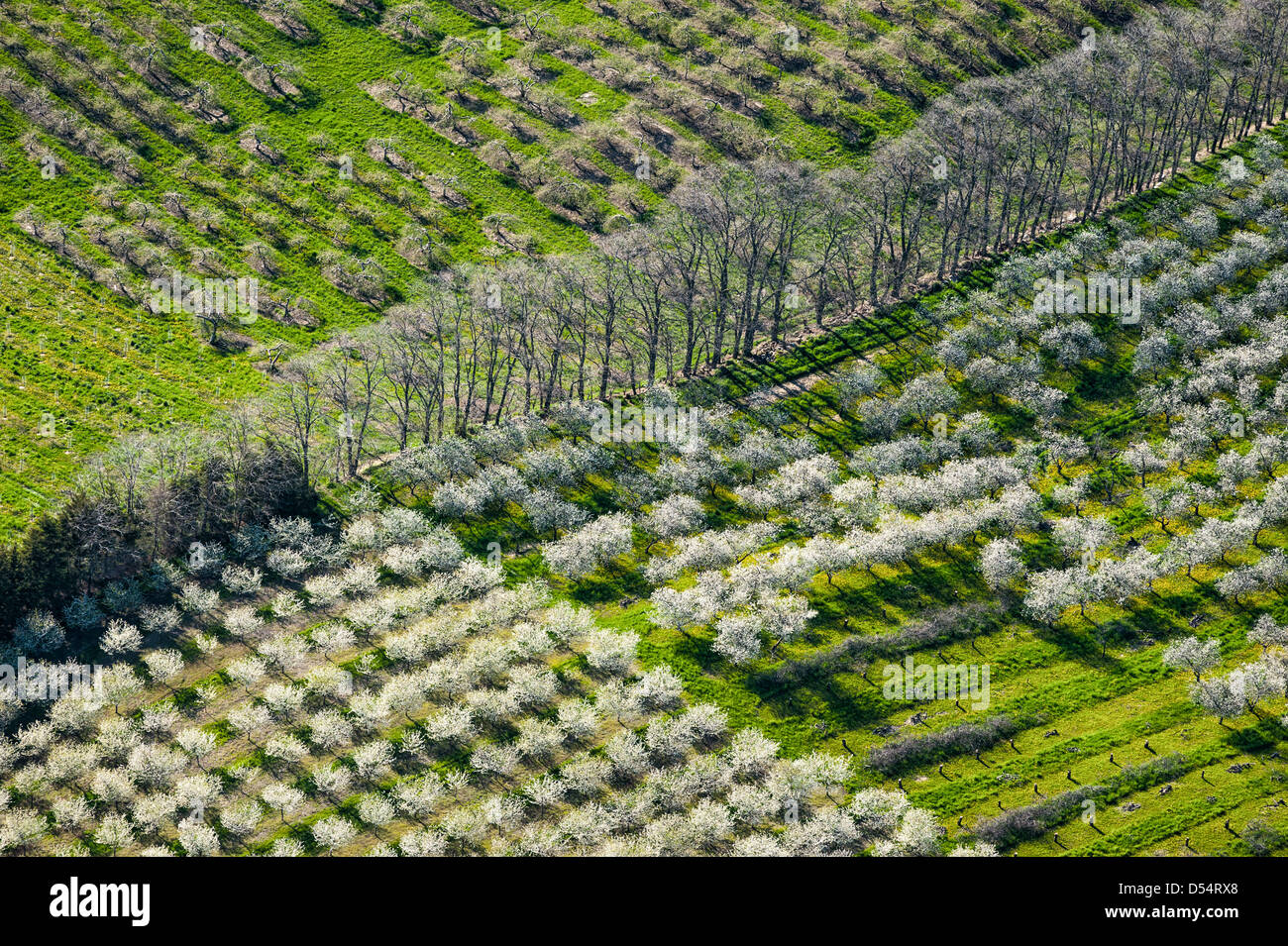 Aerial view of cherry orchard spring blossoms in Mason County, Michigan, USA. Photography by Jeffrey Wickett, NorthLight Photography. Stock Photo