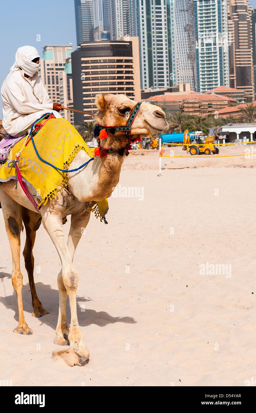 Camel in the famous Dubaî modern city, United Arab Emirates - Stock Image