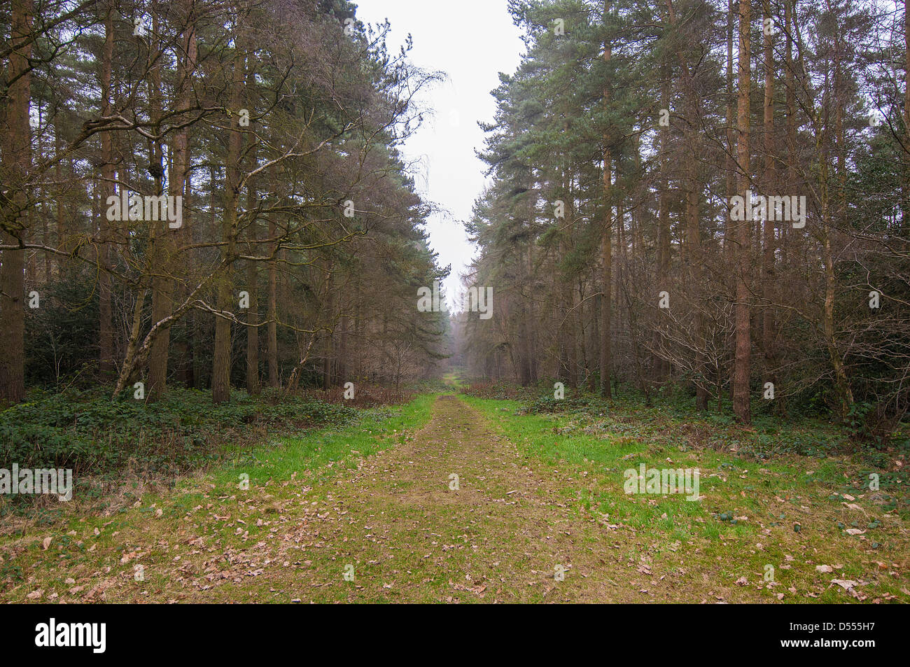 Dirt road in forest - Stock Image