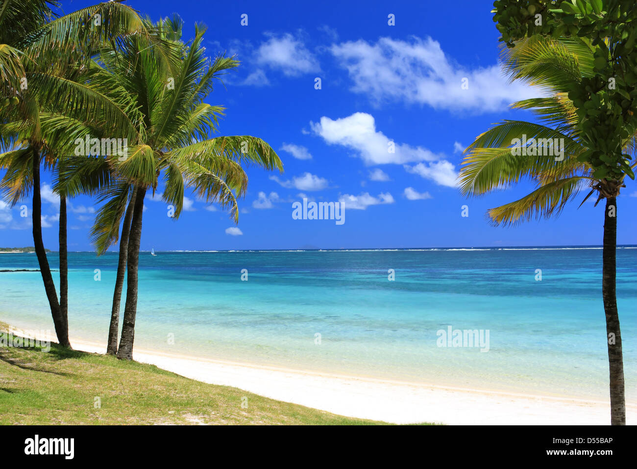 beautiful beach in Mauritius island with palms and ocean - Stock Image