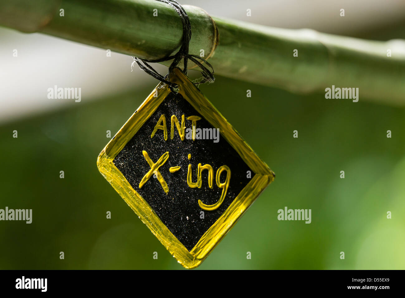 Ant crossing sign at the Jardin de Mariposas, Monteverde Butterfly Gardens, Monteverde, Costa Rica. - Stock Image