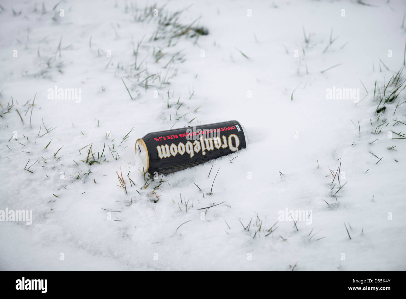 Empty can of strong larger beer in snow , Warwickshire, England, UK - Stock Image