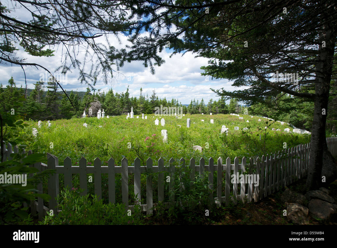 An overgrown old cemetery along one of the Old Trails of Salvage, Eastport Peninsula, Bonavista Bay Newfoundland, - Stock Image