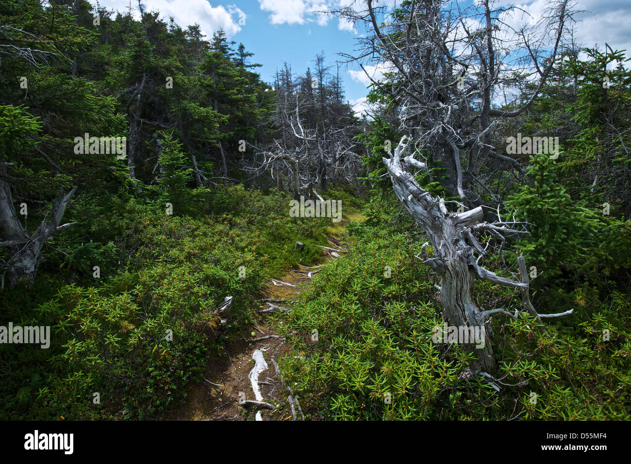Along one of the Old Trails of Salvage, Eastport Peninsula, Bonavista Bay Newfoundland, Canada. - Stock Image