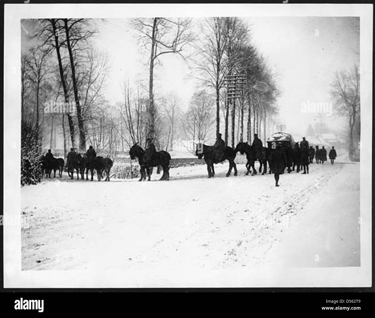 Transport horses going to water - Stock Image