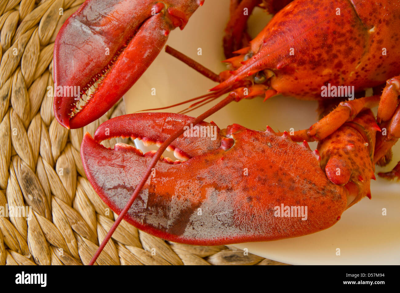 Lobster claws on a plate - Stock Image