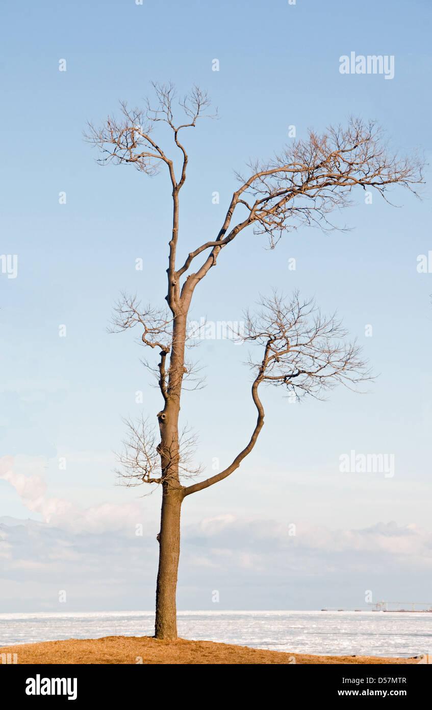 Single tree on the shore of Lake Erie - Stock Image