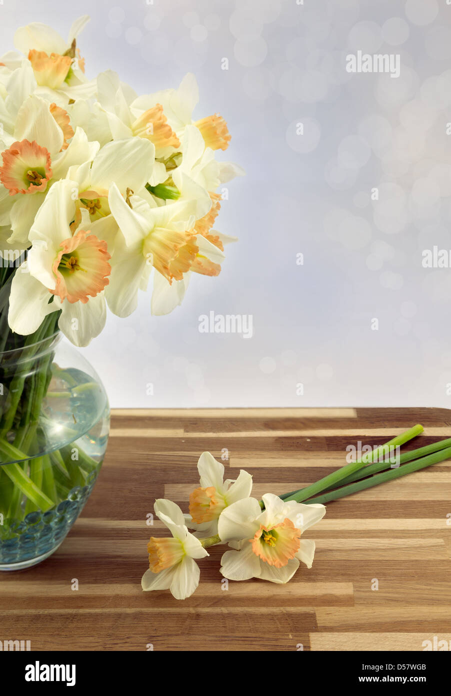 Beautiful spring daffodils in a glass vase. - Stock Image