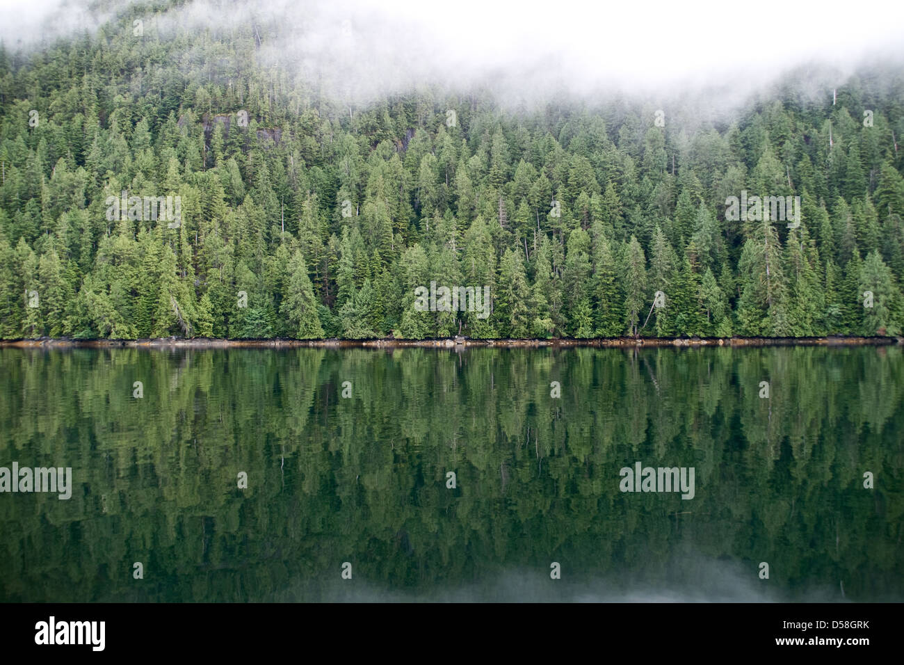 A densely forested mountainside beneath mist in in Roscoe Inlet in the Great Bear Rainforest, British Columbia, - Stock Image
