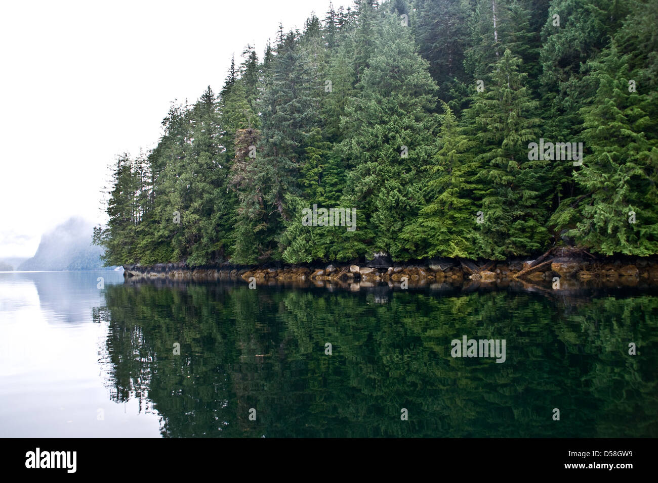 Refections of a forested coastline in the Troup Passage in the scenic Great Bear Rainforest, coastal British Columbia, - Stock Image