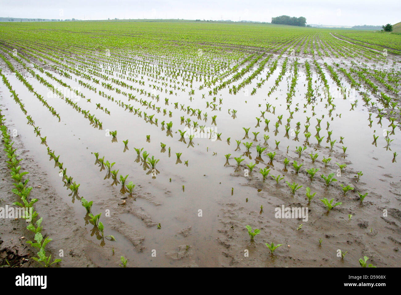 Agriculture Weather Rain Water Drowned Field Stock Photos