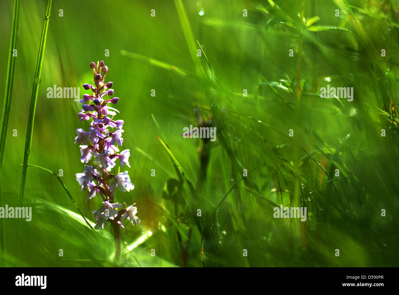 Summer at grass roots level - Stock Image