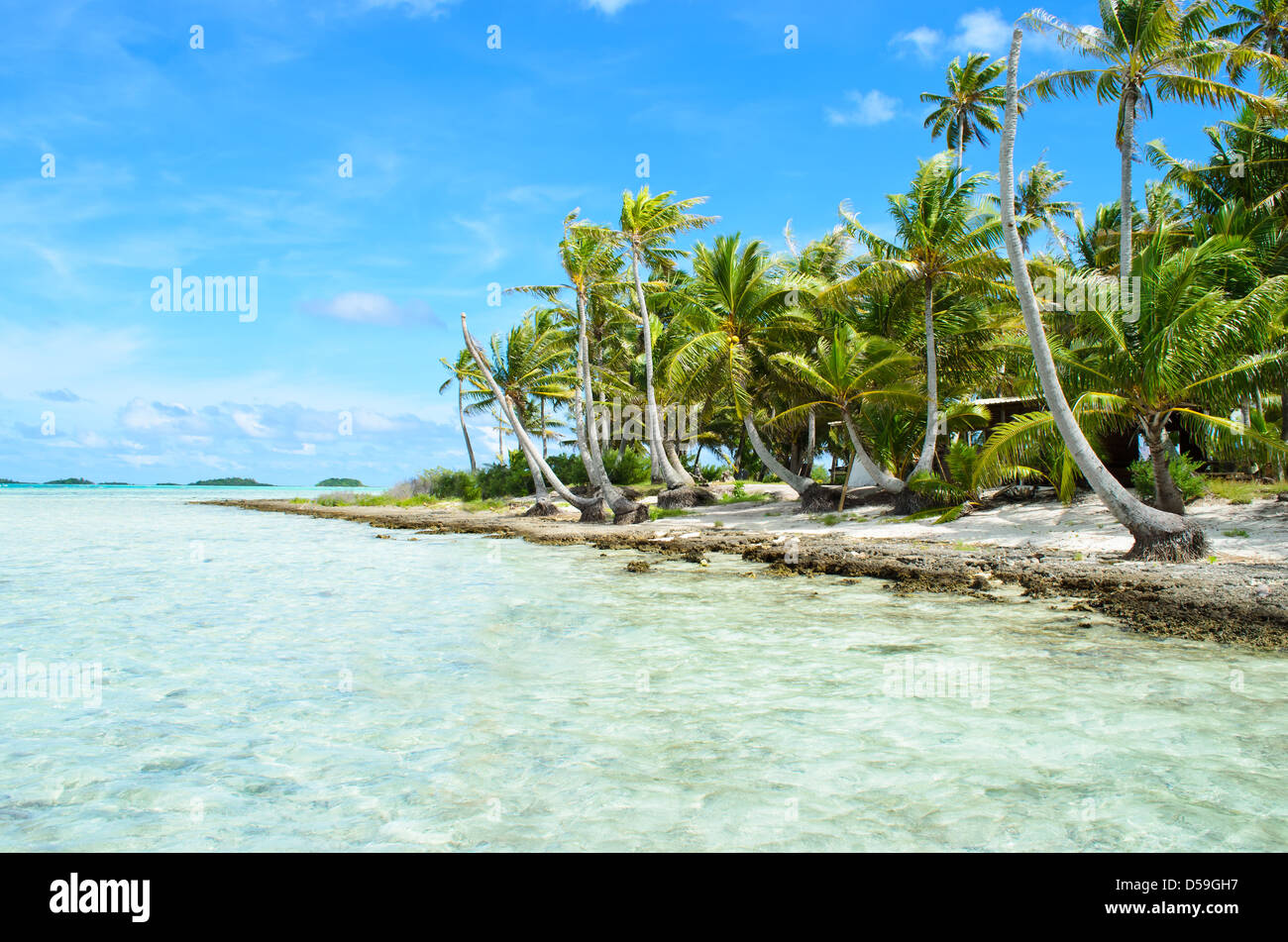 Coconut palms on the beach of a desert island near Tahiti in French Polynesia in the pacific ocean. - Stock Image